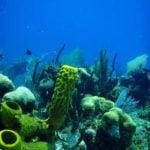 Four Top Dive Sites in Belize