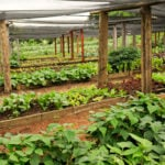Belize Photo Of The Day: Chaa Creek's Maya Organic Farm