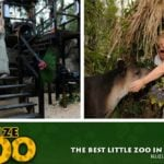 Wedding Bells at The Belize Zoo