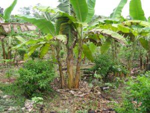 el pilar forest garden