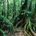 I Want to Be an Eco Kid of the Belize Rainforest