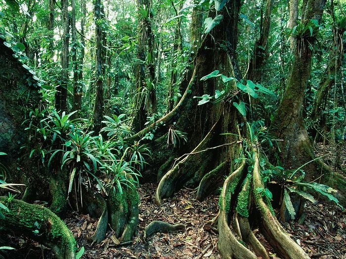 Belize Rainforests