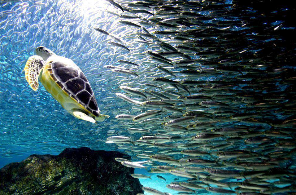 Belize Environment