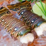 """Biggest Ever"" Lobster Fest Kicks Off in Belize"