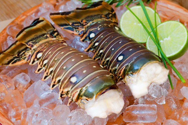 Lobster in Belize