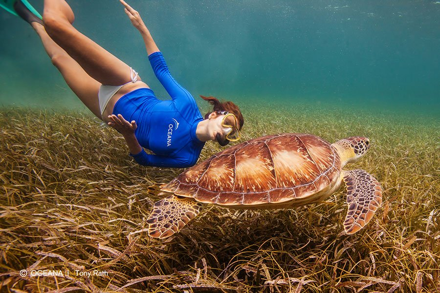 kate-walsh-belize-turtle-oceana