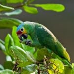 "Birding in Belize is an ""Experience of a Lifetime"""