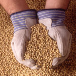 The Government of Belize discovers and destroys genetically modified soybean seeds