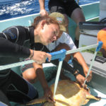 More than just a search – Google helps Belize's sea turtles