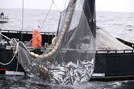 Commercial Fishing