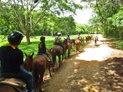 Eco Camp horse Caravan, just trotting along