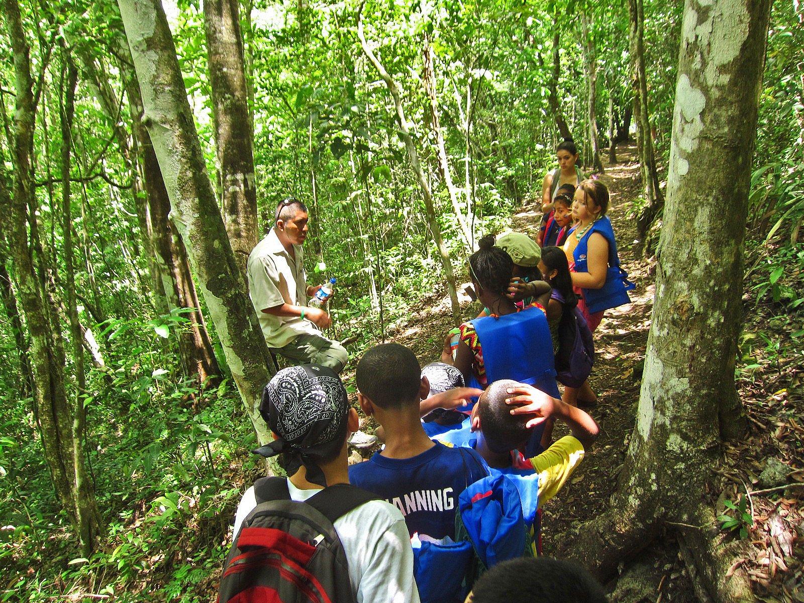 Explaining why the white poisonwood is dangerous