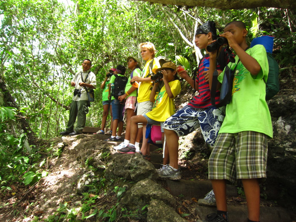 team Blue Monkeys Looking for  a motmot