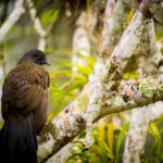 Belize's Bountiful Birds Showcased in latest Audubon Magazine