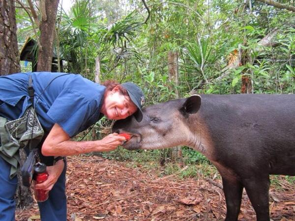 tapir april belize