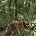 Belize Research Shows How Fungi are our Forest's Friends