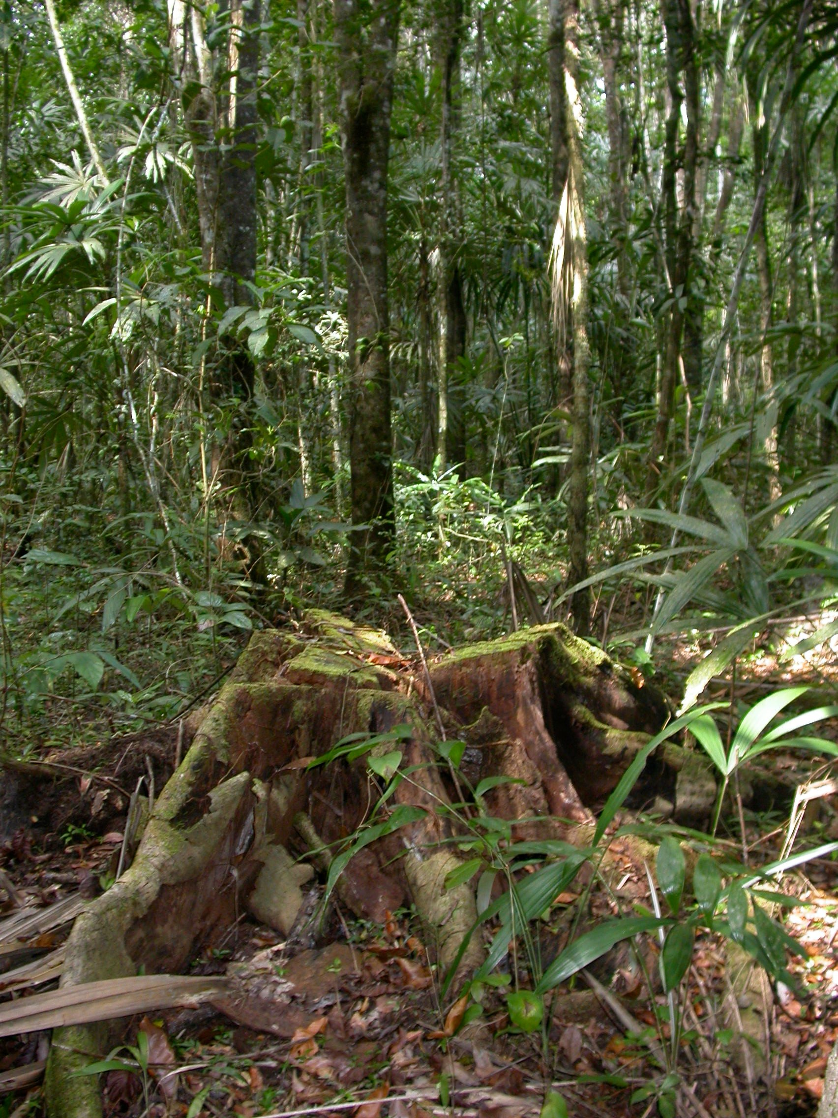 Belize-forest-scene-fungi-research