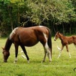 What you need to know about The Year of the Horse and its ties to Belize