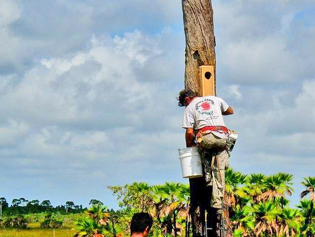 Belize-Birds-Birding-Conservation-Ecotourism