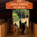 Chaa-Creek-Horse-Stables