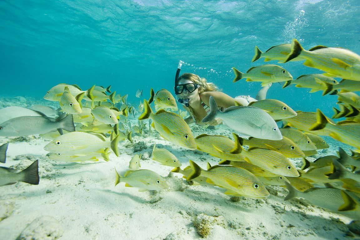 Marine Conservation in Belize gets better!