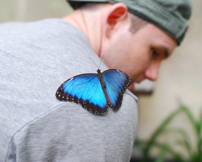 Chaa-Creek-Butterfly-Exhibit