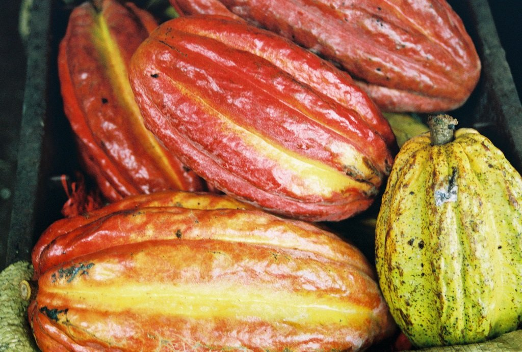 Cacao-in-Belize