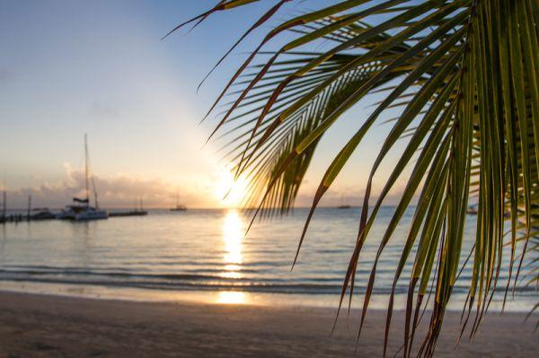 palm_tree_beach_sunrise_Belize