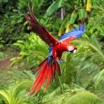 10 Astonishing Birds of Belize!