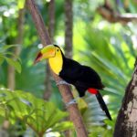 The Bountiful Beauty of Belizean Birds