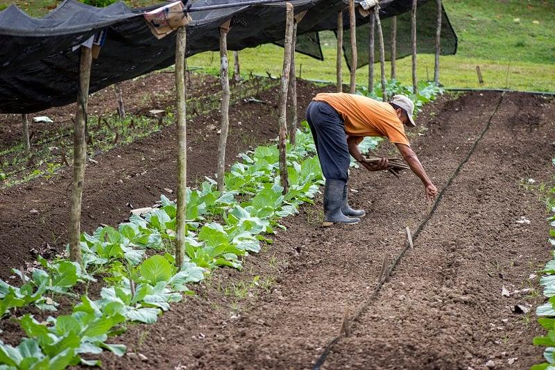 Maya-Organic-Farming