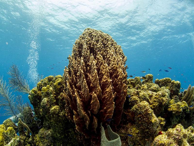 Belize-Barrier-Reef-Protection