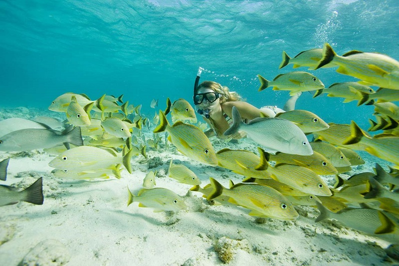 Shark Alley at Hol Chan reserve, Ambergris Caye,Belize