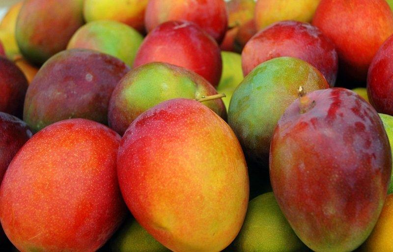 Belize-Fruits-Mango