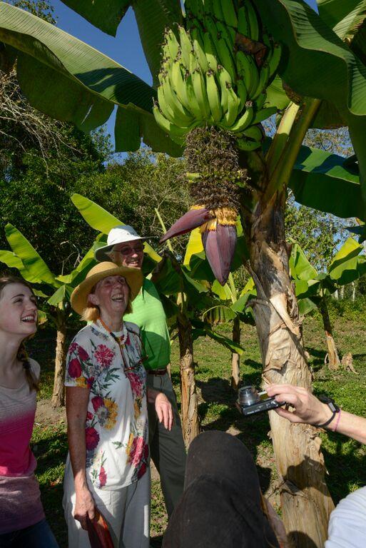 Belize-Vegetables-Plantains