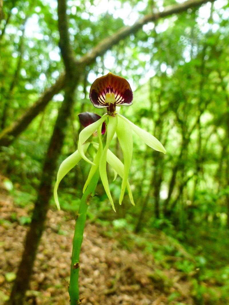 EcoKids2015-black-orchid-1