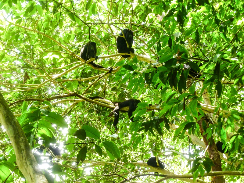 EcoKids2015-howler-monkeys -1