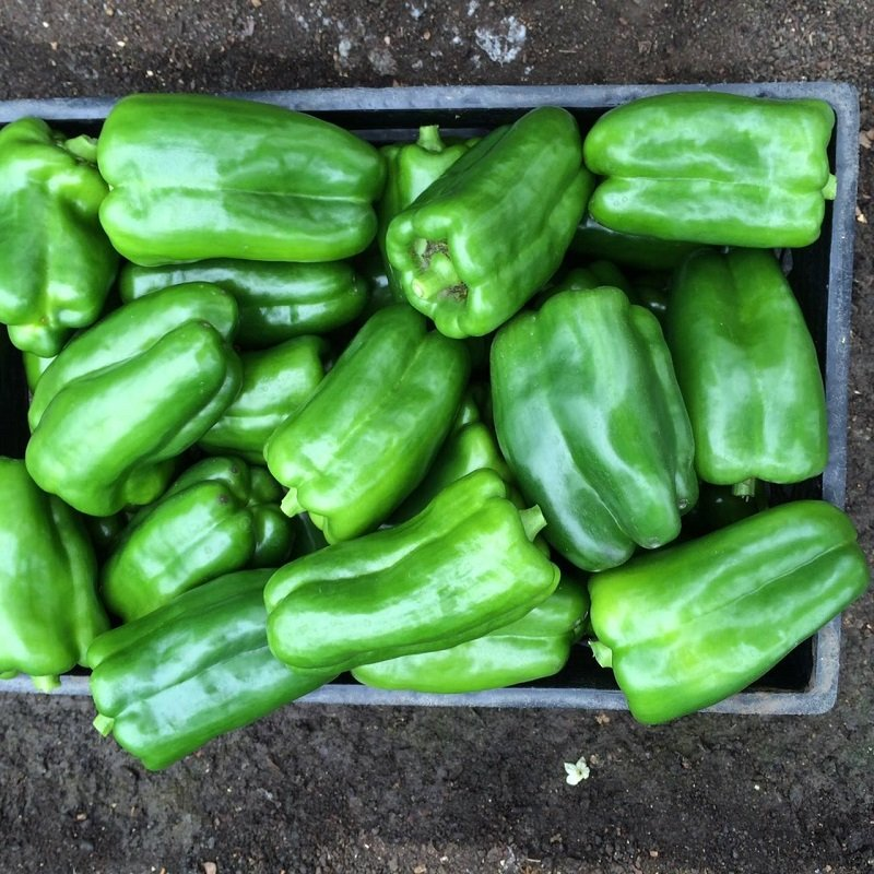 Organic-Green-Bell-Peppers
