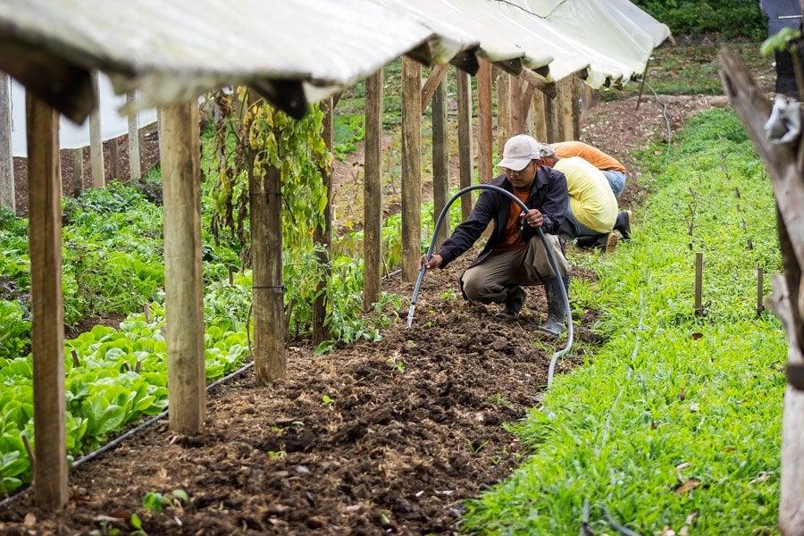 belize-food-chaa-creek-organic-farm-belize