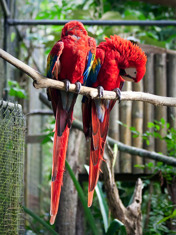 belize-in-one-lifetime-chaa-creek-2016-macaw