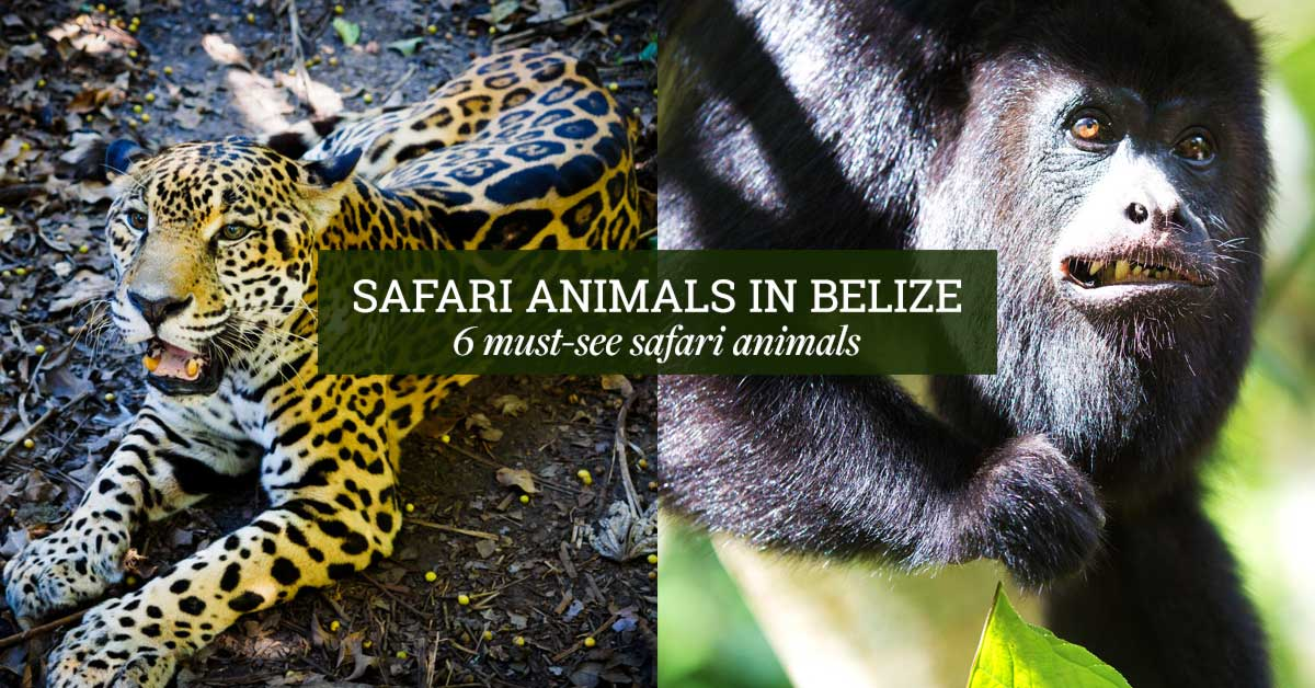 belize_animals_safari_travel_guide_chaa_creek_cover