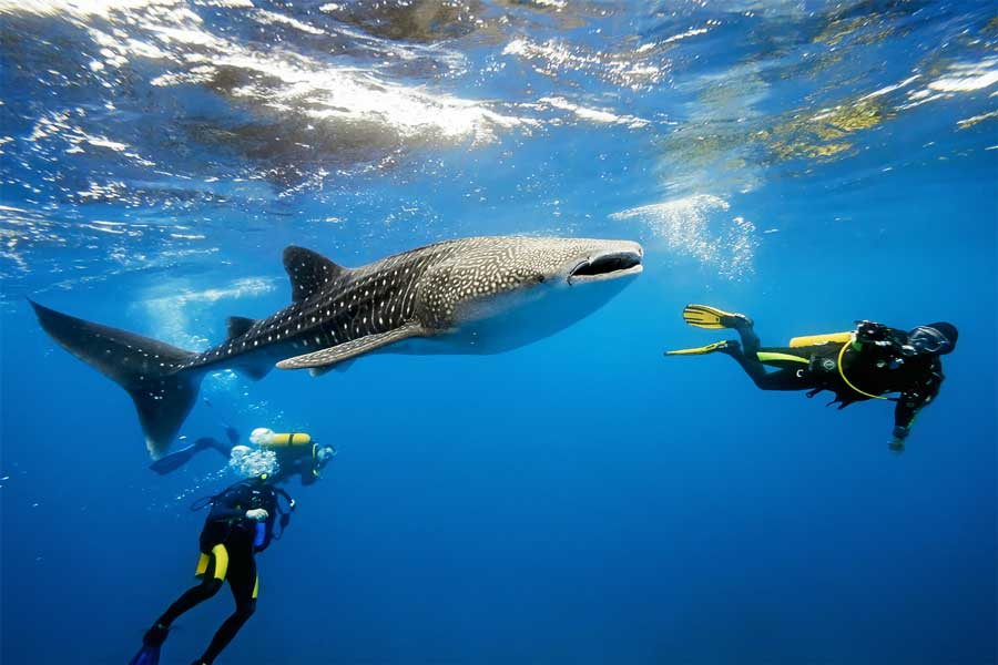 Belize S Low Season Best Time To Visit Whale Shark Scuba Dive Travel Guide 2016 Optimized