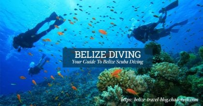 belize_diving_scuba_guide_cover