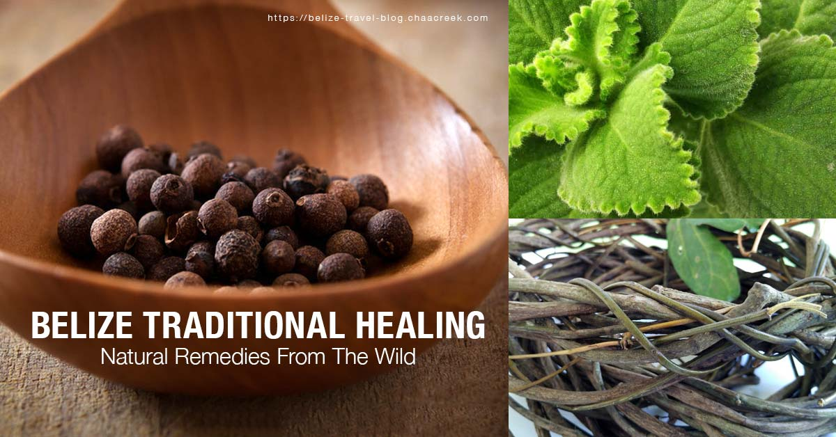 Belize Traditional Healing Remedies From The Wild