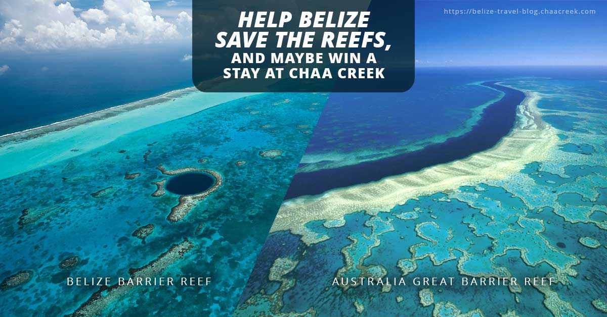 Belize Sister Reef Project Win Vacation