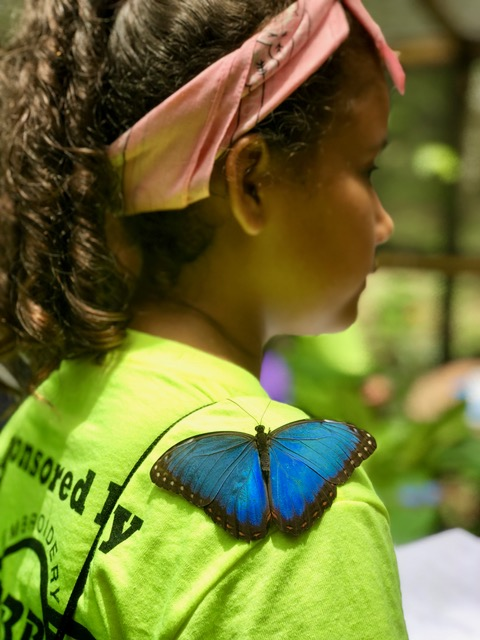 Eco Kids Summer Camp 2018 Day 2 Butterfly