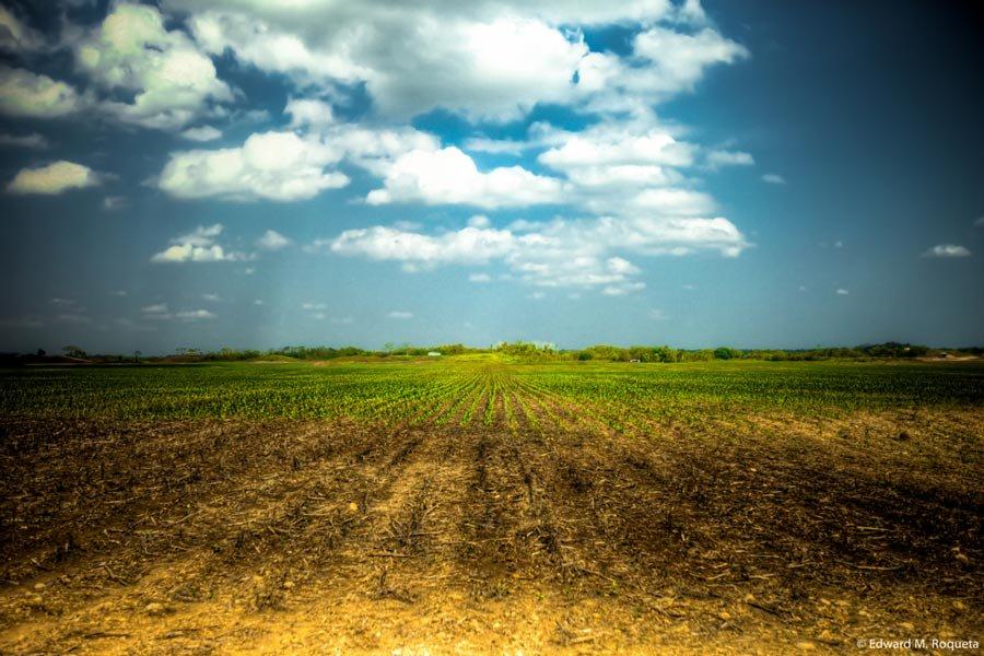 belize mennonite communities farming spanish lookout