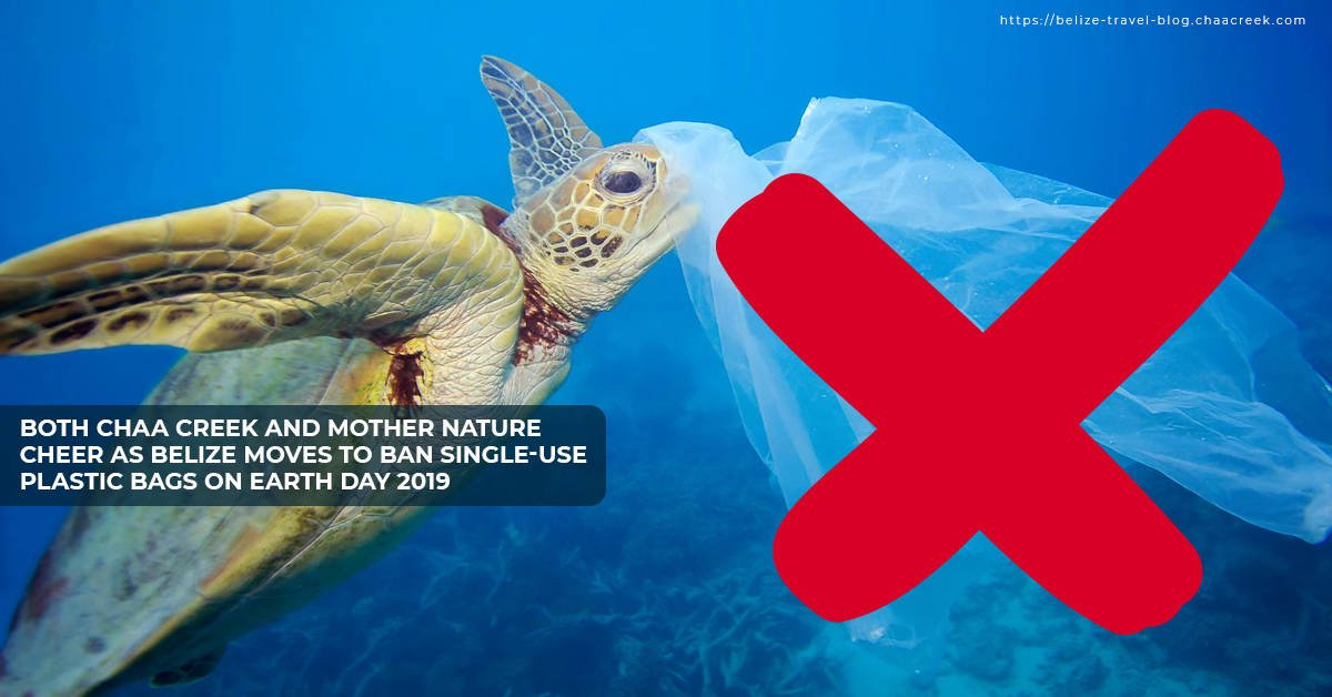 Belize moves to ban single plastic use on earth day 2019