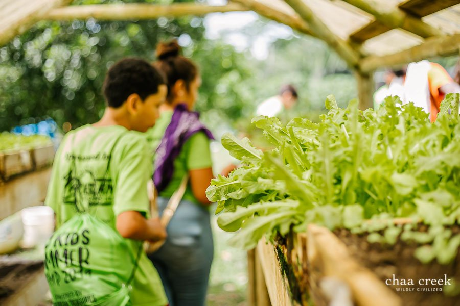 eco kids summer camp 2019 day 5 greenhouse tour
