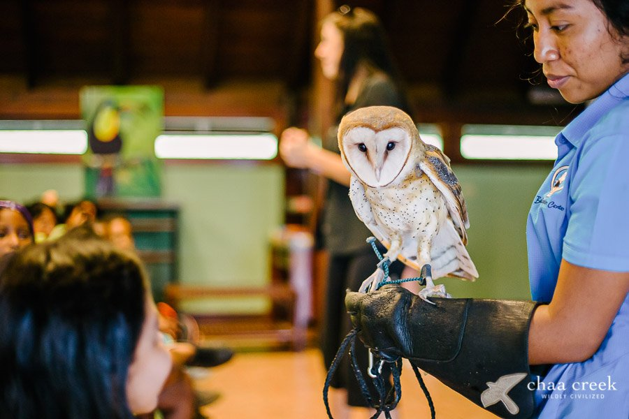 eco kids summer camp 2019 day 7 barn owl